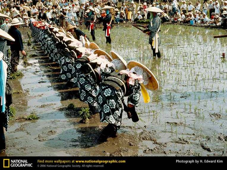 "Photograph by H. Edward Kim, ""Day of the Rice God,"" National Geographic Magazine, July 1978"